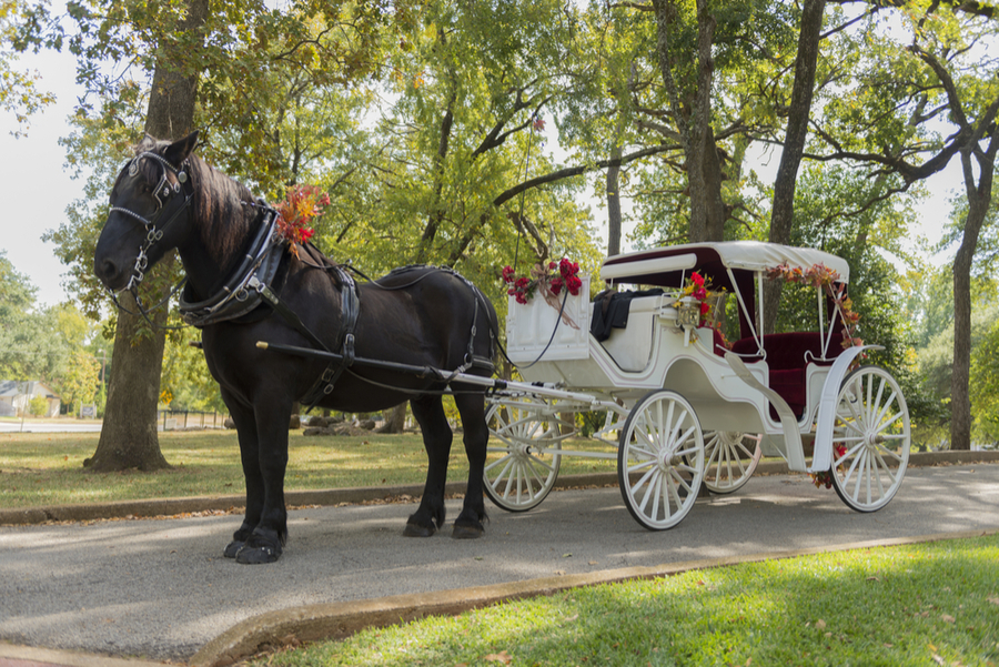 Los Angeles Enchanted Carriages